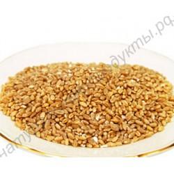 """Горная пшеница """"ДЗАВАР"""", высший сорт, фермерская"""